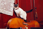 CAT 02 RK1164 02