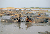 AFW 01 GL0007 01