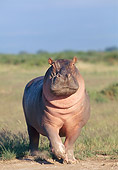 AFW 01 GL0008 01