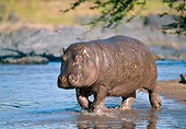 AFW 01 GL0009 01