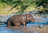 AFW 01 GL0011 01