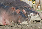 AFW 01 LS0001 01