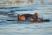 AFW 01 MC0014 01