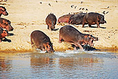 AFW 01 MH0002 01