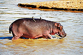AFW 01 MH0003 01