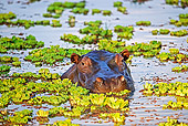 AFW 01 MH0004 01