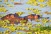 AFW 01 MH0005 01