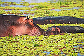 AFW 01 MH0008 01