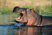AFW 01 MH0014 01
