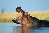 AFW 01 MH0015 01