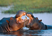AFW 01 MH0018 01