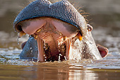 AFW 01 MH0025 01