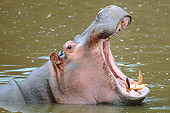 AFW 01 NE0011 01