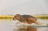 AFW 01 WF0007 01