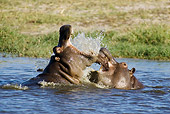 AFW 01 WF0019 01