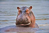 AFW 01 WF0025 01