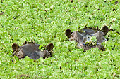 AFW 01 NE0003 01