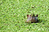 AFW 01 NE0004 01