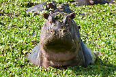 AFW 01 NE0005 01
