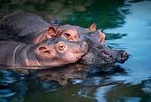 AFW 01 RK0021 24