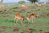 AFW 02 BA0002 01
