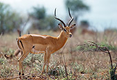 AFW 02 BA0006 01