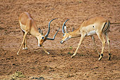 AFW 02 GL0001 01
