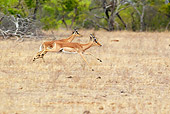 AFW 02 HP0001 01