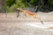 AFW 02 HP0003 01