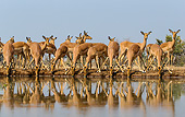AFW 02 KH0006 01