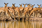 AFW 02 KH0007 01