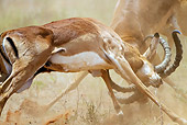 AFW 02 MC0005 01