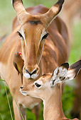 AFW 02 MC0009 01