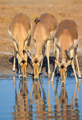 AFW 02 MH0004 01