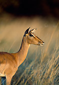 AFW 02 MH0008 01