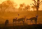 AFW 02 MH0009 01