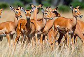 AFW 02 MH0010 01