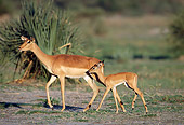 AFW 02 MH0011 01