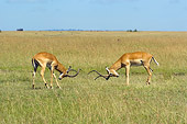 AFW 02 NE0004 01