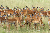 AFW 02 NE0005 01