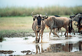 AFW 03 BA0001 01