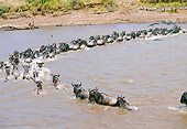 AFW 03 GL0003 01