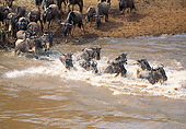 AFW 03 GL0007 01