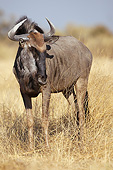 AFW 03 MC0010 01