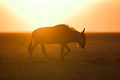 AFW 03 MH0004 01