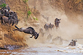 AFW 03 MH0009 01