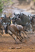 AFW 03 MH0018 01