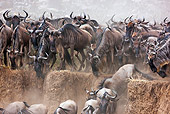 AFW 03 MH0019 01