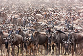 AFW 03 MH0020 01