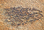 AFW 03 MH0024 01